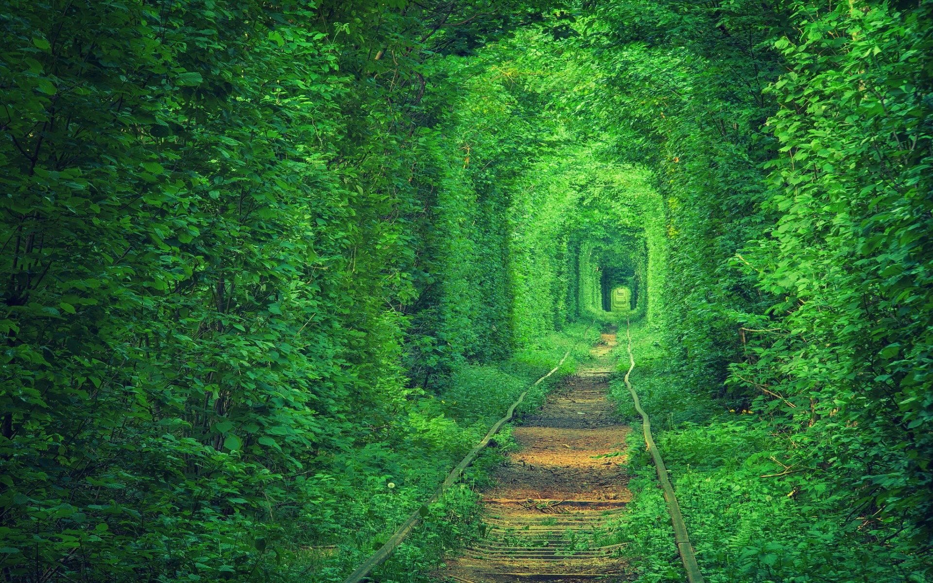 green_wallpaper_amazing_photo_5070